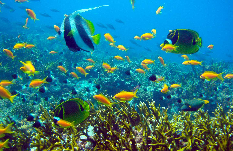 mafia_island_tanzania_under_water_1