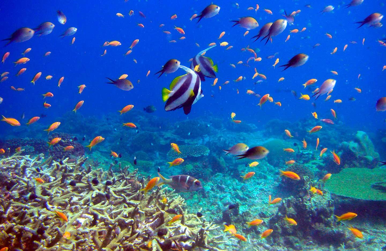 mafia_island_tanzania_under_water_5