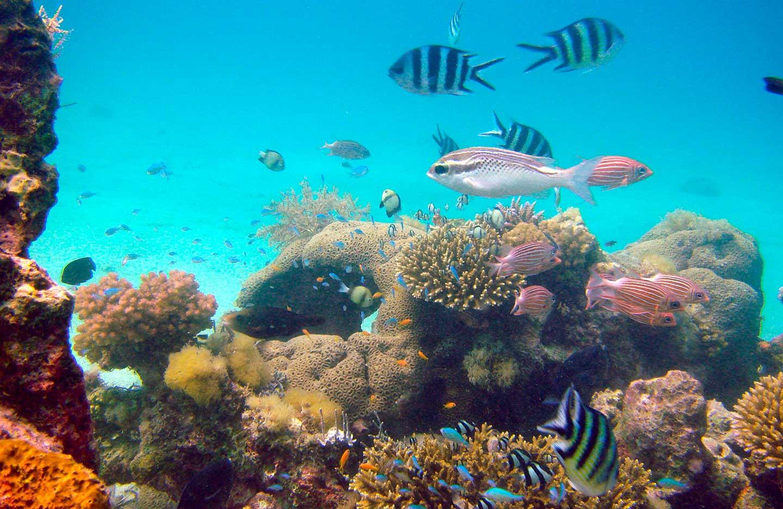 mafia_island_tanzania_under_water_7